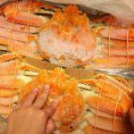 ボイル姿ズワイ蟹到着|カニ味噌タップリ